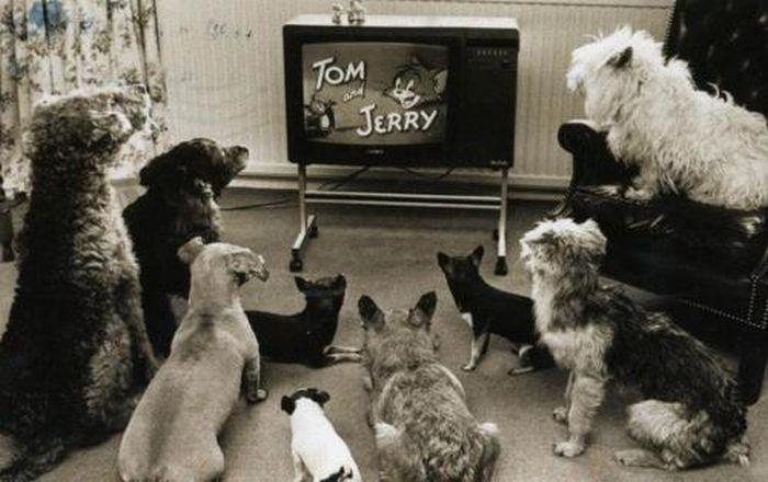 Top 5 de animales ficticios molones que salían en algún anuncio de televisión